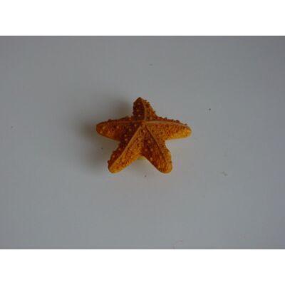 Gomb fogantyú - Tengeri csillag, sokszínű színű
